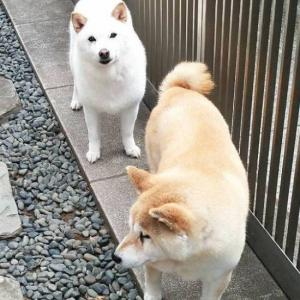 10/7コタロウ・ファミリーのシャンプー・デイ!
