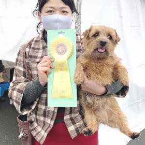 1/24千葉東クラブ連合会展 ピッコロクロがG3でチャンピオン完成!