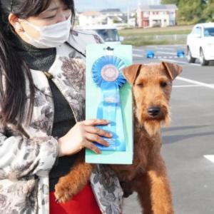 10/23桐生全犬種クラブ展・ジェイドG1