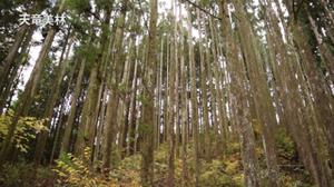 三大美林と三大人工美林