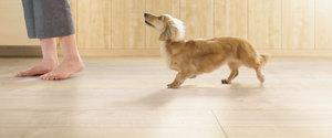 愛犬の足腰にやさしいペット用床材