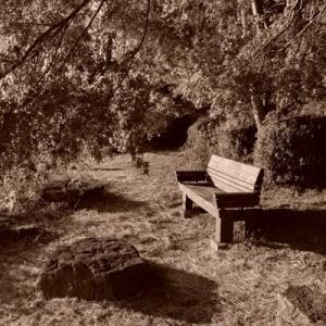 山田池公園sepia (7)