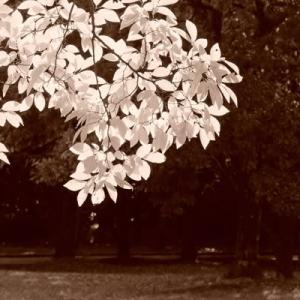 山田池公園sepia (10)