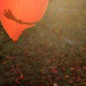 逆光でみる葉っぱ