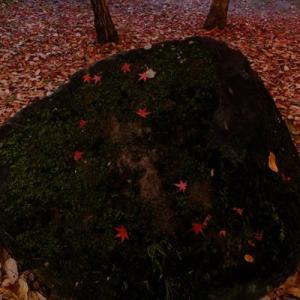 山田池公園・秋から冬へ (1)