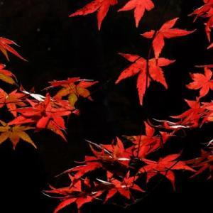 山田池公園・秋から冬へ (2)