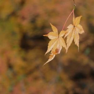山田池公園・秋から冬へ (3)