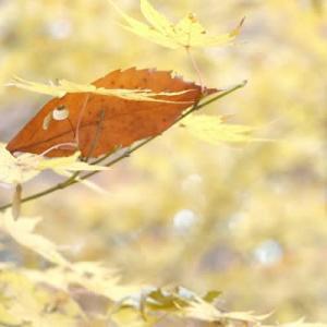 山田池公園・秋から冬へ (5)