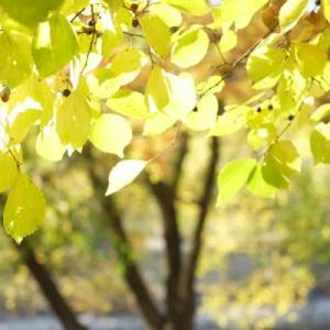 山田池公園・秋から冬へ (6)
