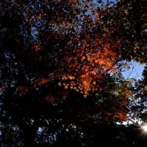 山田池公園・秋から冬へ (7)
