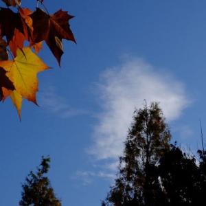 山田池公園・秋から冬へ (8)