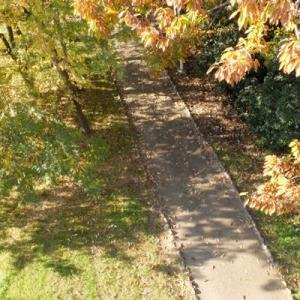 山田池公園・秋から冬へ (9)