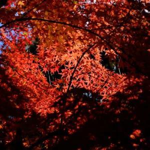 秋から冬へ (番外編)