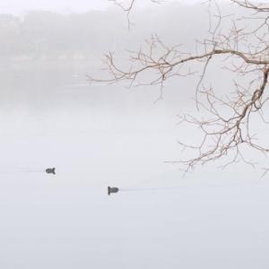 霧の山田池公園 (2)