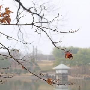 霧の山田池公園 (3)