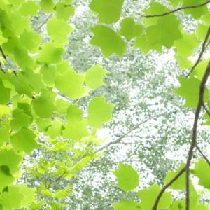 山田池公園・緑 (2)