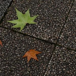 落ち葉の季節じゃないけれど
