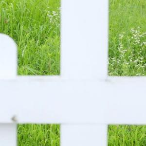 フェンスの向こう側