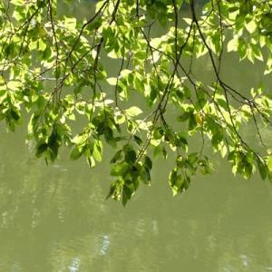 水面の上で葉が光る