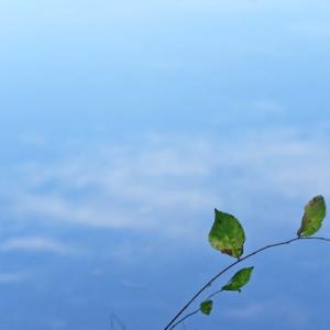 空色の水面