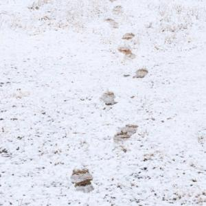 雪の山田池公園 (7)