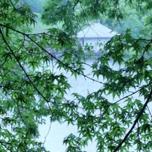 雨の山田池公園 (1)