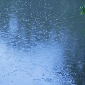 雨の山田池公園 (2)