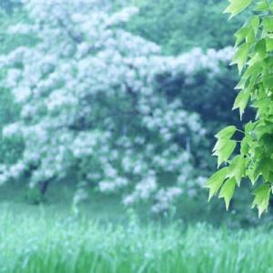 雨の山田池公園 (3)