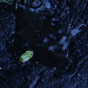 雨の山田池公園 (4)
