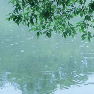 雨の山田池公園 (6)