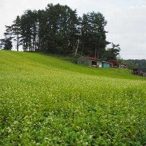 中山高原のそば畑&幻の池