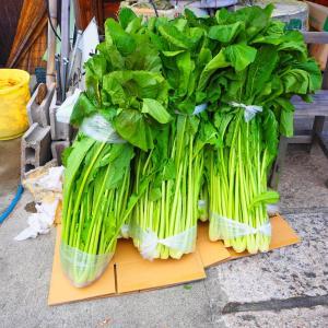 野沢菜の醤油漬け30キロナリ
