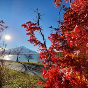 ◼️山中湖の紅葉