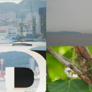 2020年7月24日,昨夕,今朝の風景 神戸港,セミ