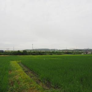 2020年7月29日,山陽線 56レ EF210-115+福山通運