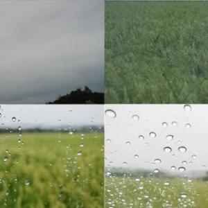 2020年9月25日,昨夕,今朝の風景 曇天,雨天
