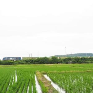 2021年7月7日 山陽線 56レ EF210-151+福山通運