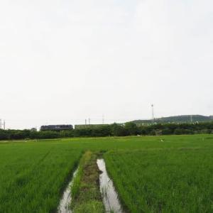2021年7月13日 山陽線 115系,56レ EF210+福山通運