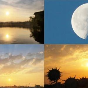 2021年7月31日 昨夕,今朝の風景 3050レ,3091レ DE10-1164,サンライズ出雲,56レ 福山通運