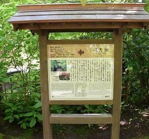 北鎌倉 明月院の紫陽花♯1
