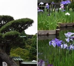 長谷寺の紫陽花~稲村ケ崎駅 ♯2