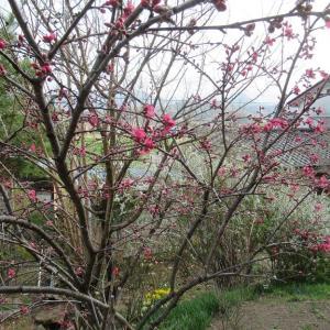 4月1日2日は長野県で聖火リレー~❤