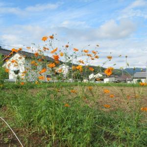 秋の花とローズヒップス