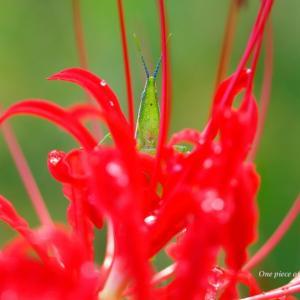 虫と彼岸花