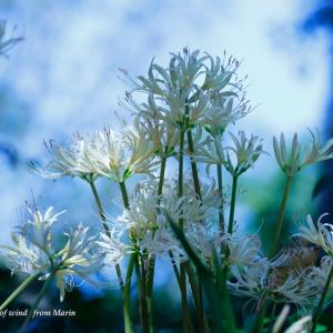 異世界の入り口に咲く花