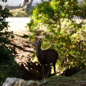 奈良の紅葉と鹿