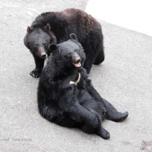 小熊ちゃん抱っこ♪