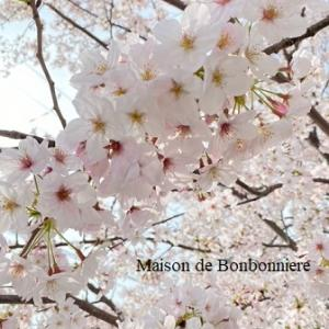 ワンコと桜パトロール