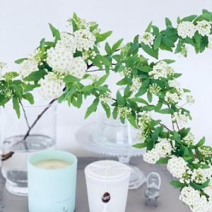 リビングのお花が満開に~コデマリ~