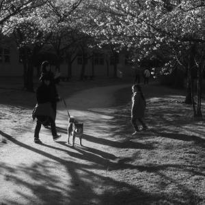 記念写真 2020 櫻の春 #04
